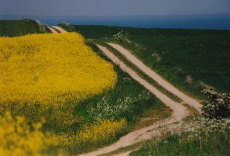 Ein Feldweg führt rechtwinklig über eine Hügellandschaft. Links ein blühendes Rapsfeld, rechts Grünland.